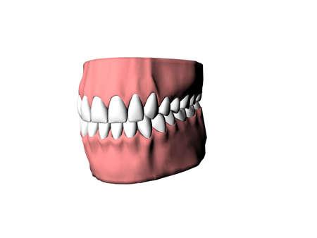 dentures: Isolated dentures Stock Photo