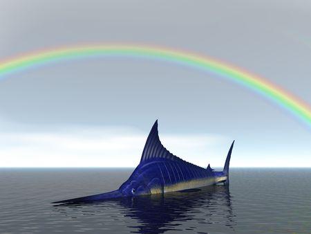 Marlin under a rainbow