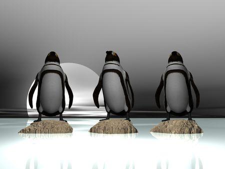 Penguins on rocks Фото со стока