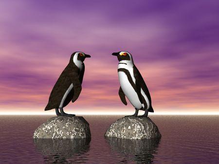 antarctic: Two penguins on rocks