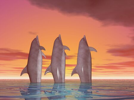 Three dolphins illustration