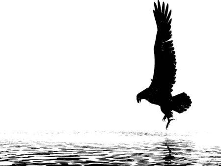 descending: Duotone Eagle descending over water Stock Photo