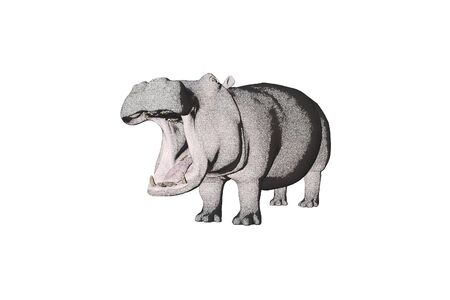 antagonistic: Illustrated colored pencil sketch Hippo Stock Photo