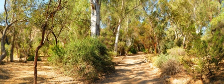 Fork in the road or trail panorama photo
