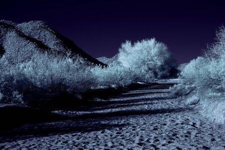 plantas del desierto: Plantas de desierto de luz de la Luna en el desierto de Arizona de invierno Foto de archivo