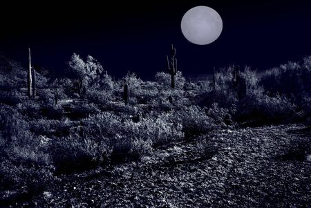 tucson: Moonlight Desert plants in the winter Arizona desert
