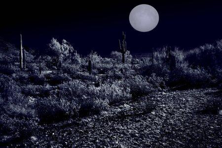 Moonlight Desert plants in the winter Arizona desert