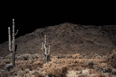 Saguaro cactus in the winter Arizona desert Imagens