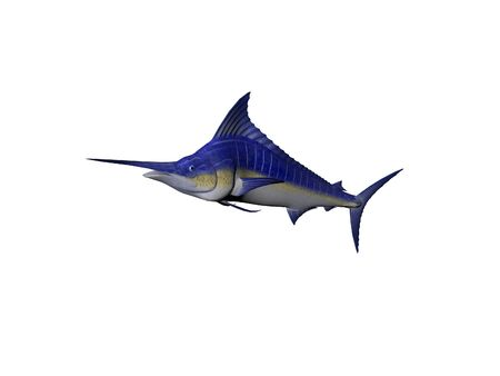 A Single Blue Marlin fish isolated over white