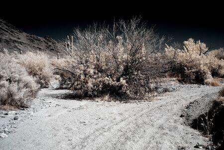 Moonlight Saguaro cactus in the winter Arizona desert mountains photo