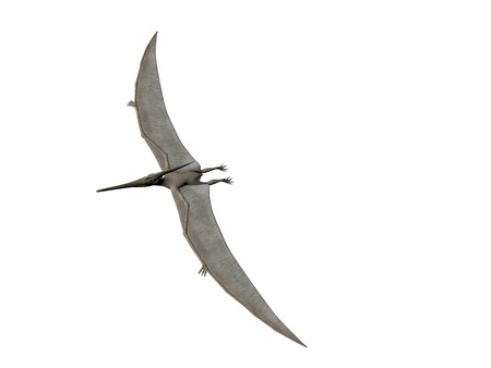 pterodactyl: Pterodactyl or Pteranodon flying isolated over white Stock Photo