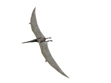 pterodactyl: Pterodactyl or Pteranodon flying isolated over white Stock Photo