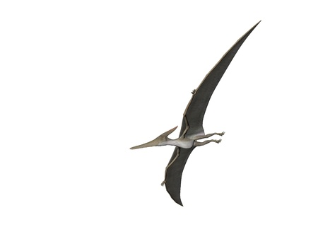Pterodactyl or Pteranodon flying isolated over white photo