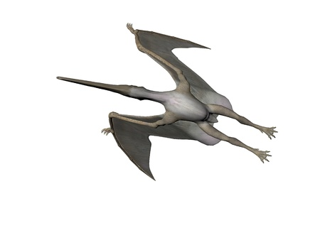 Pterodactyl or Pteranodon dinosaur isolated over white photo