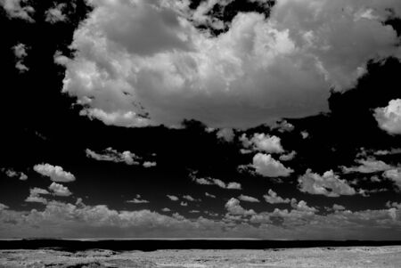 black: Petrified forest Arizona alien desert black and white landscape Stock Photo