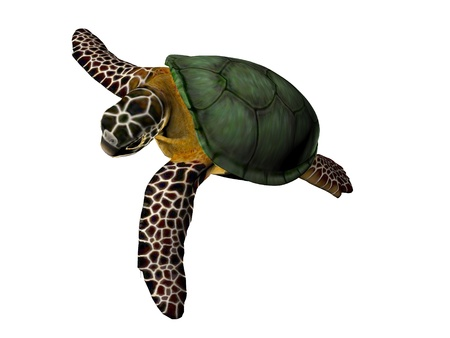 isolado no branco: 3D illustration of a great sea turtle isolated