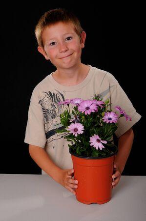 tending: Young boy tending Osteospermum flowers in a pot