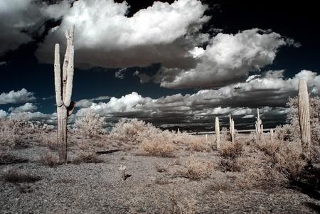 desert storm: Tormenta del desierto en las monta�as y el desierto suroeste