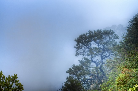 rock strata: Early morning fog coming up the canyon Stock Photo