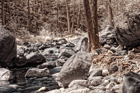 pine creek: A Mountain creek in the pine forest