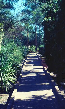 megapixel: Trail in a lovely garden - 27 megapixel image shot on film - as scanned edge cropping and spotting only. Film grain apparent at this large size