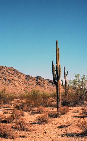 Saguaro Kakteen in Arizona Mountains Stockfoto - 11119280