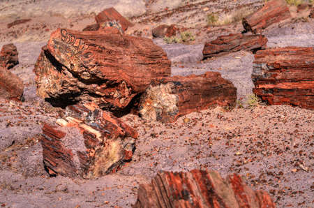 petrified fossil: Petrified trees in the petrified forest in Arizona Stock Photo
