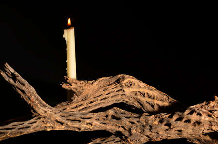 cholla: Dead cholla skeleton and a single lit candle