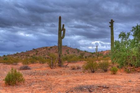 gust: Stock Photo: Desert storm over the southwestern desert and mountains
