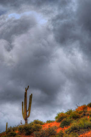 A dark storm forming over a Saguaro cactus Stock Photo - 11332095