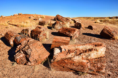 petrified fossil: Stone trees in Petrified forest Arizona state