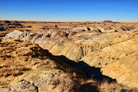 alien landscape: Il paesaggio Alien di foresta pietrificata dell'Arizona