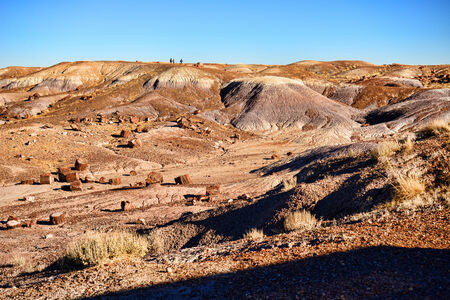 petrified fossil: Alien ladnscape of the petrified forest Arizona Stock Photo