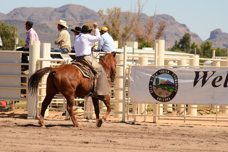 busting: Sacaton, Arizona United States, March 16, 2014: Mul-Chu-Tha Rodeo contestants - Bucking horse Bronc busting, Calf  Roping, and steer wrestling