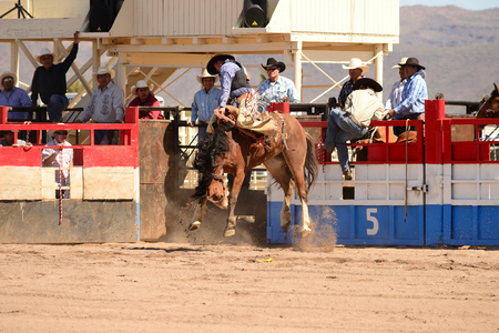 bucking horse: Sacaton, Arizona United States, March 16, 2014: Mul-Chu-Tha Rodeo contestants - Bucking horse Bronc busting, Calf  Roping, and steer wrestling