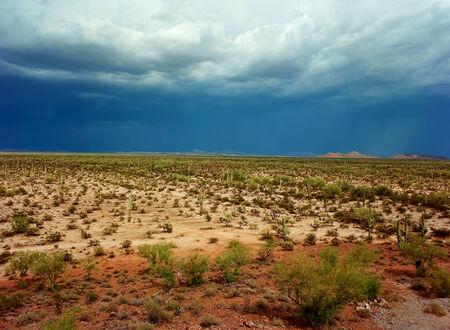 sonora: Sonora desert in central Arizona USA