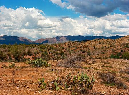 sonora: Prickly Pear Cactus in The Sonora desert in central Arizona Stock Photo
