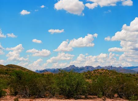 sonora: The Sonora desert in central Arizona, USA