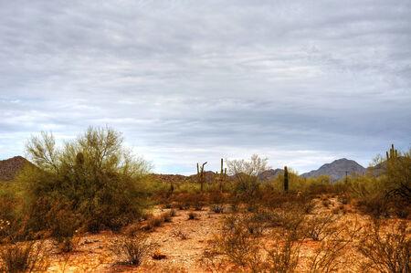 Sonora desert in central Arizona USA