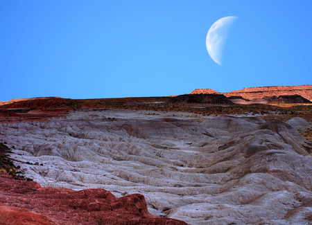 petrified fossil: Moon and scenic landscape of ancient petrified trees Stock Photo
