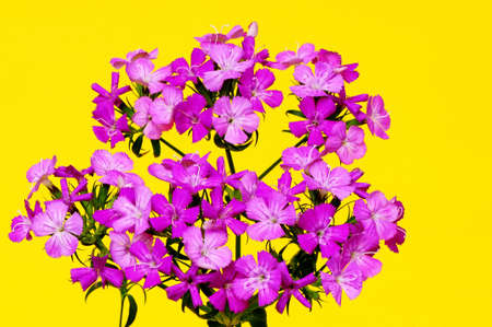 floral arrangement: Floral arrangement isolated over a yellow background Stock Photo
