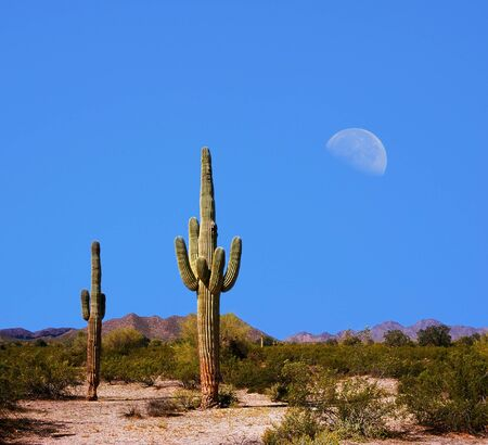 moon  desert: Sonora Desert Moon over the southwestern USA desert and mountains