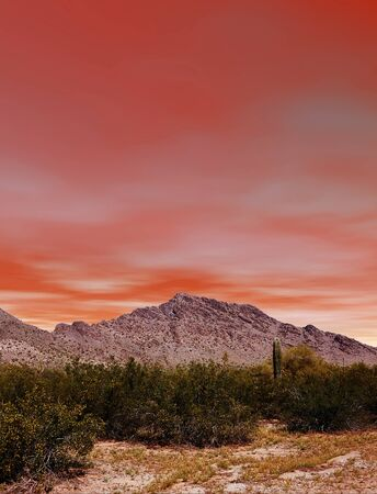 arizona sunset: Sunset Sonora desert in central Arizona USA Stock Photo