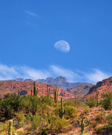 moon  desert: Desert moon over the southwestern USA Sonora desert and mountains