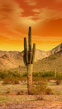 sonora: Sunset Sonora desert in central Arizona USA Stock Photo