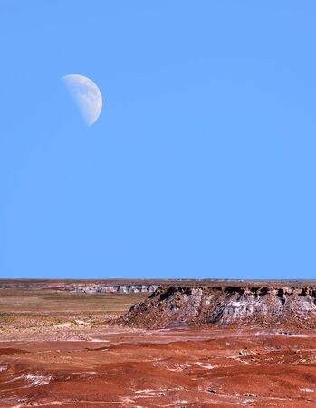 scenic landscape: Moon and scenic landscape of ancient petrified trees Arizona