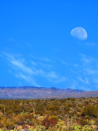 sonora: Moon rising Sonora desert in central Arizona USA