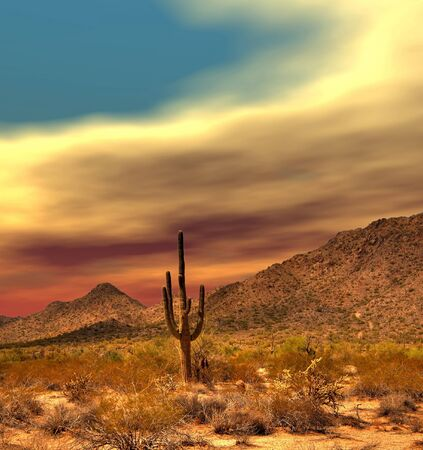 sonora: Sunset Sonora desert in central Arizona USA Stock Photo