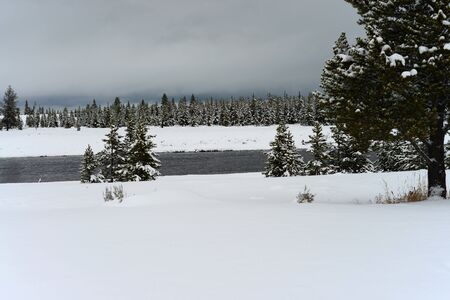 madison: Snowing on the Madison River Yellowstone National Park