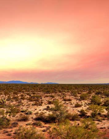 sonora: Sunrise Sonora desert in central Arizona USA Stock Photo